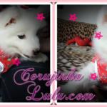 Misty e seu vestido floral vermelho – Look Pet do Dia