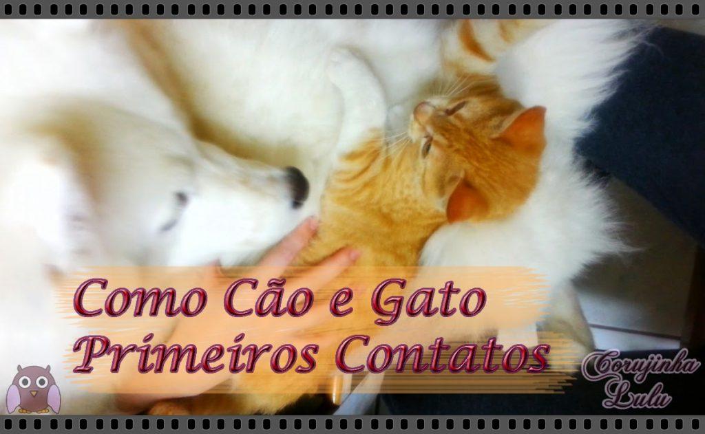 Como cão e gato: Primeiros Contatos - Pets | ©CorujinhaLulu.com