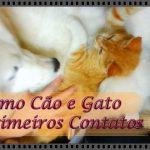 Como cão  e gato: Primeiros Contatos – Pets | Vídeo