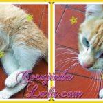 Novo membro da família: Rafi, o gatinho dourado – Pets