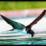 Mensagem para Reflexão: o passarinho e a floresta em chamas