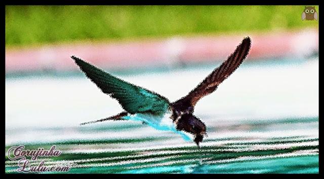 Mensagem para Reflexão - O passarinho e a floresta em chamas, faça sua parte, consciência tranquila, pense suas atitudes